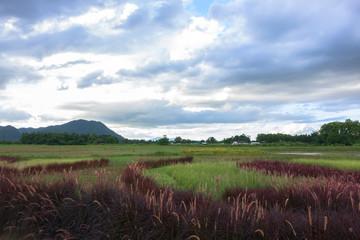 Red Grass Landscape near Mekok River.