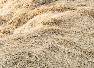 фон сухое сено
