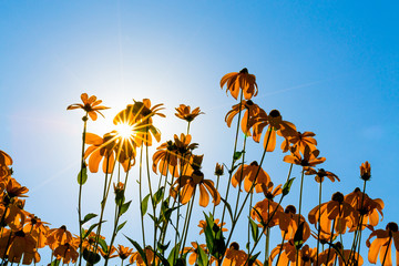 Flowers on a background of sky and sun