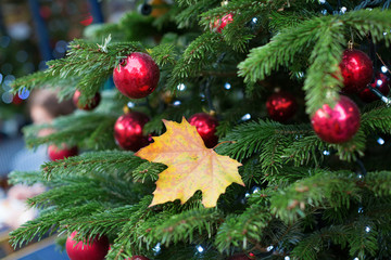 Yellow leaf on a branch of Christmas tree