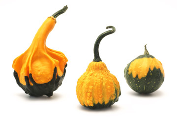Decorative pumpkins (Cucurbita L.)