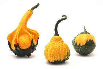 Decorative pumpkins (Cucurbita L.)