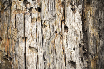 Old obsolete wood texture, backround, Crimea