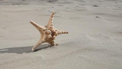 Summer holiday. Starfish seastar star on the sandy beach.