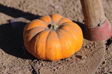 Calabaza Pumpkin Zucca Citrouille Dynia Pumpa Kürbis 南瓜