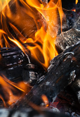 close up of burning wood in fireplace