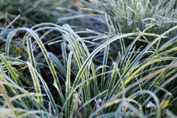 Closeup Frozen Grass