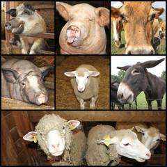 collage animaux de la ferme