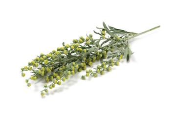 Common Artemisia stem isolated on white background