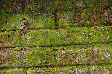 Moss on the Stone Fence