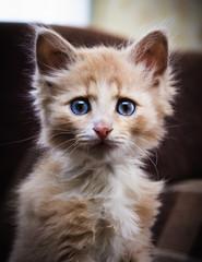 Small surprised kitten