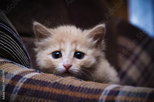 Scared kitten - 69187497