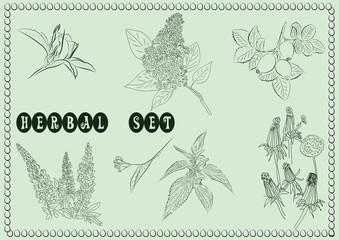 Set of fresh  herbs