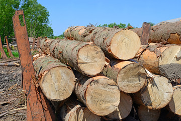 Wood preparation
