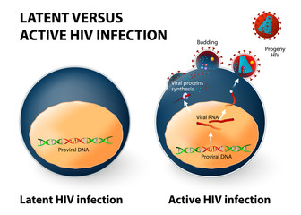 Latent and active HIV infection