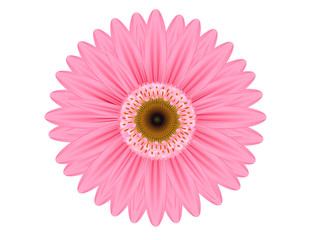 pink gerbera flower on white background