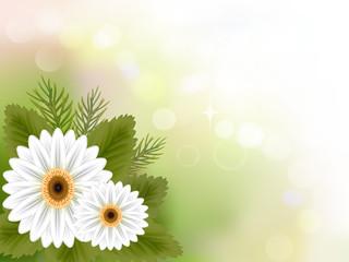 white gerbera flower on green shiny background