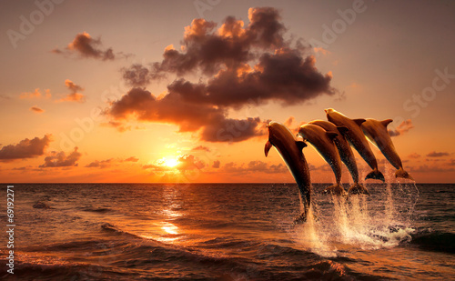 Fotobehang Dolfijn beautiful sunset with dolphins jumping
