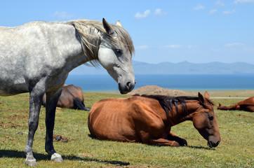 Horses on the shore of a mountain lake