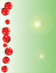 Tomato line : background