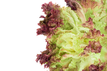 Red lettuce isolated on white.