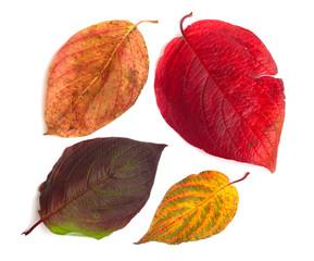 Set of  beautiful autumn leaves