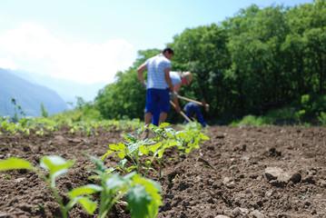 lavoro in campagna