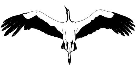 lying White Stork