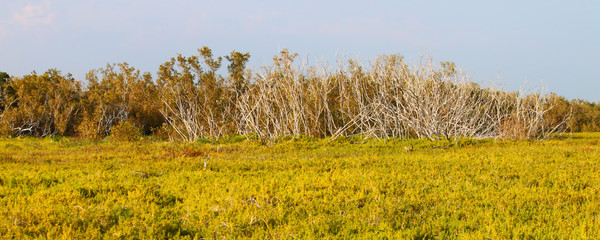 Coastal Prairie Trail Panorama
