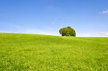 Einsamer Baum auf Wiese