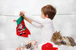 Boy hangs socks for Santa Claus.