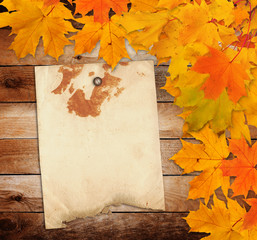 Old grunge paper with autumn maple branch leaves on the wooden b