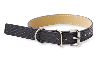 Black dog collar isolated on white background with clipping path