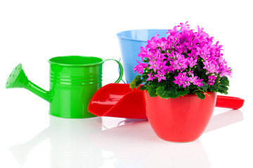 campanula flowers with watering can, on white background