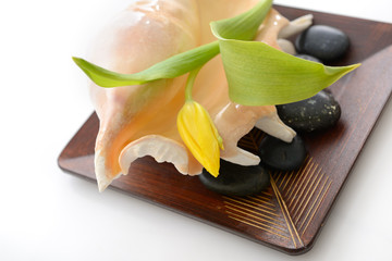 spa still life with tulip, stones and sea shell on wooden bowl o