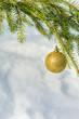 ������, ������: Golden Christmas ball on spruce branch