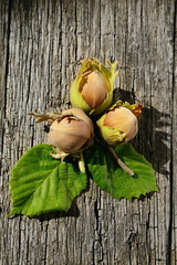 Three hazelnuts on wooden background
