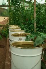 Woda do podlewania w szklarni