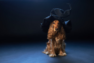 dog sitting in a witches hat