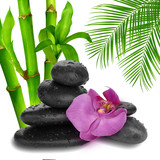 purple orchid flower end bamboo - 69216297