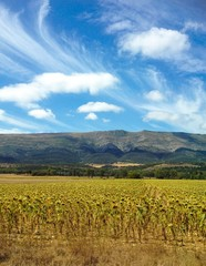 Campos de Castilla y León