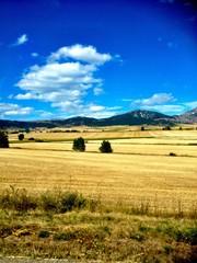 Campos de trigo en Burgos
