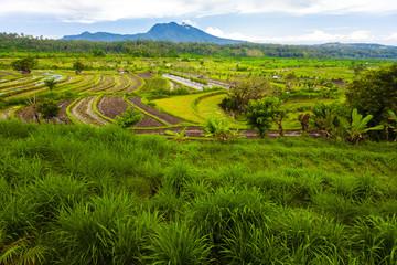 Rice terrace of Bali Island, Indonesia.
