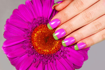 Beautiful woman's hand with french bi color manicure on gerbera