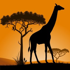 Savannah, the silhouette of the trees and the giraffe.