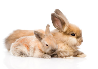 Two cute rabbits in profile. isolated on white background