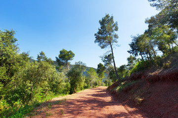 mountainous road and pine trees. Montseny