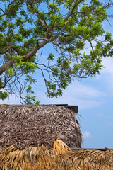 House under the thatch roof and acacia