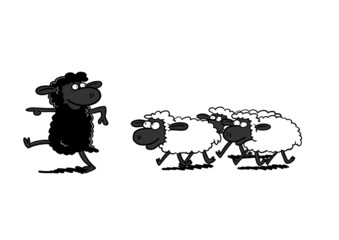 Black Sheep Leading White Sheep