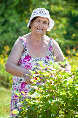 Portrait of pension age woman when gardening